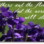 Facebook Friday~ Free Timeline Cover {God's Word Stands Forever}